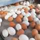 EGG SYSTEMS